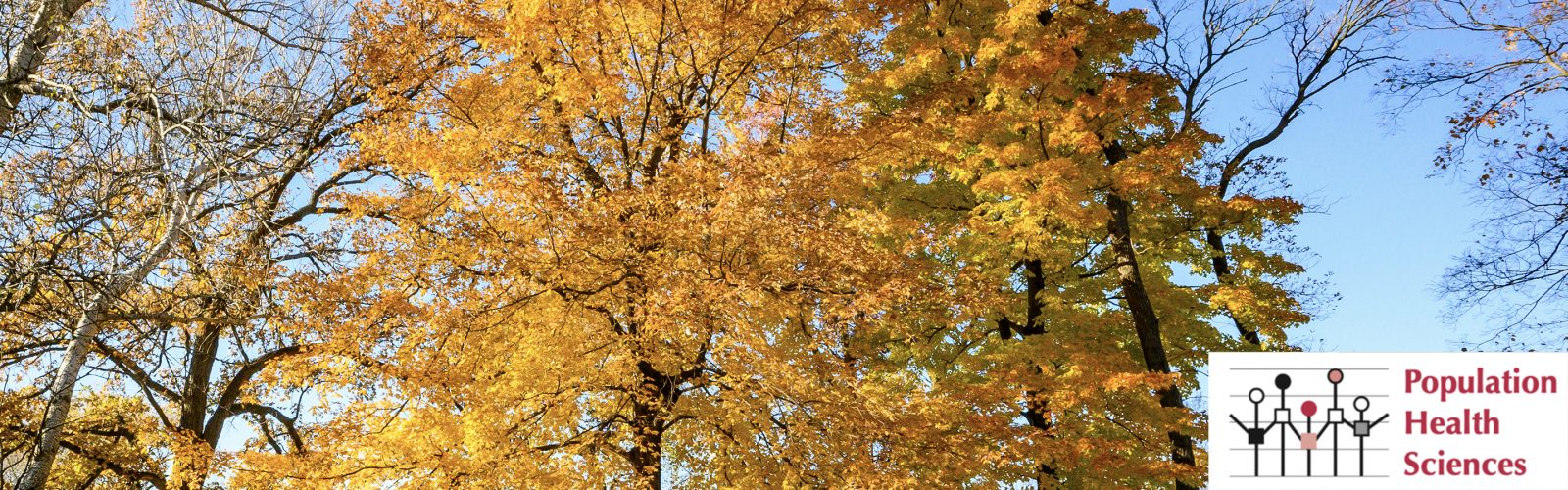 Fall scene, trees with yellow leaves